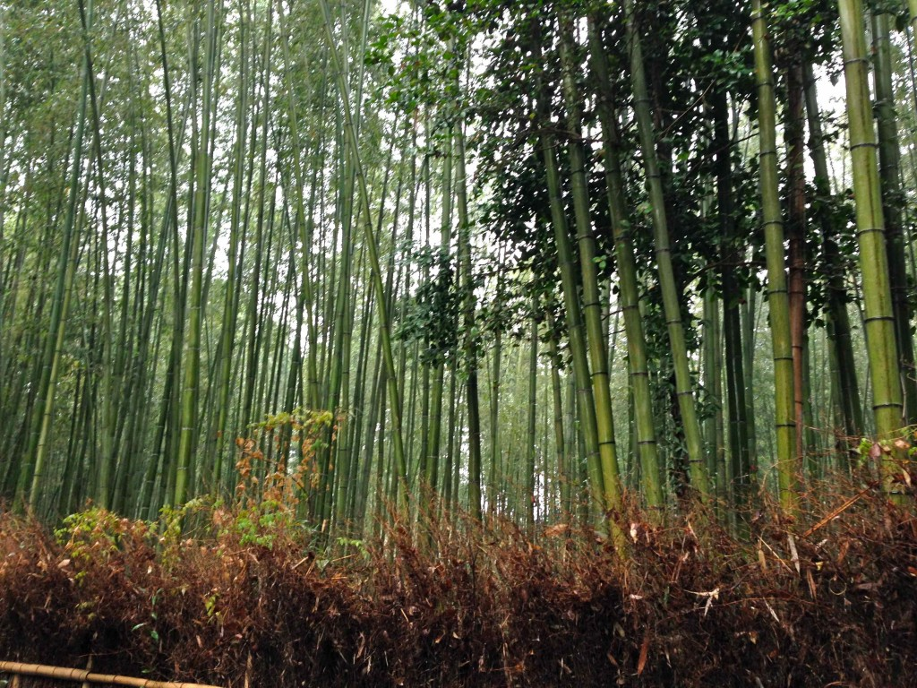 Kyoto-Bamboo-Forest