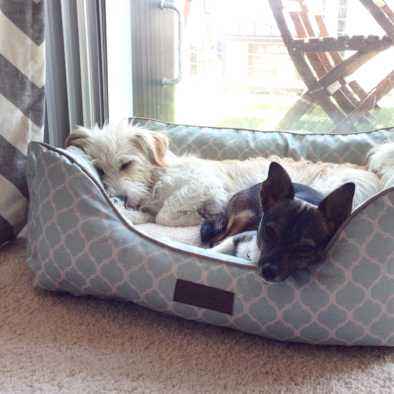 Dealing with separation anxiety in rescue dogs
