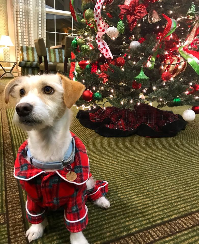 dog in christmas pajamas