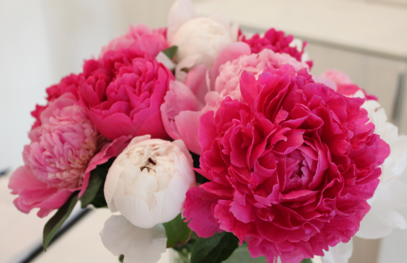 pink peonies photography