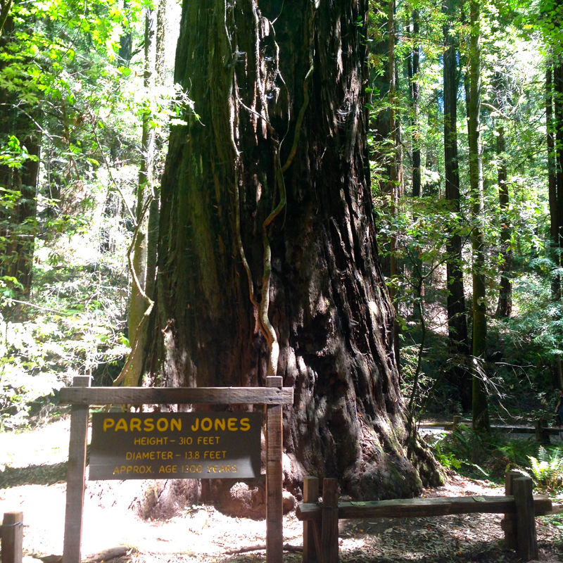 Armstrong-Redwood-Groves