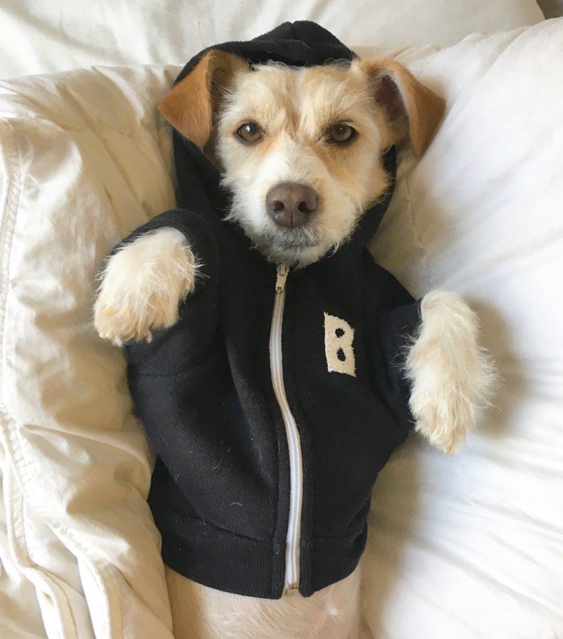 monogrammed dog hoodie