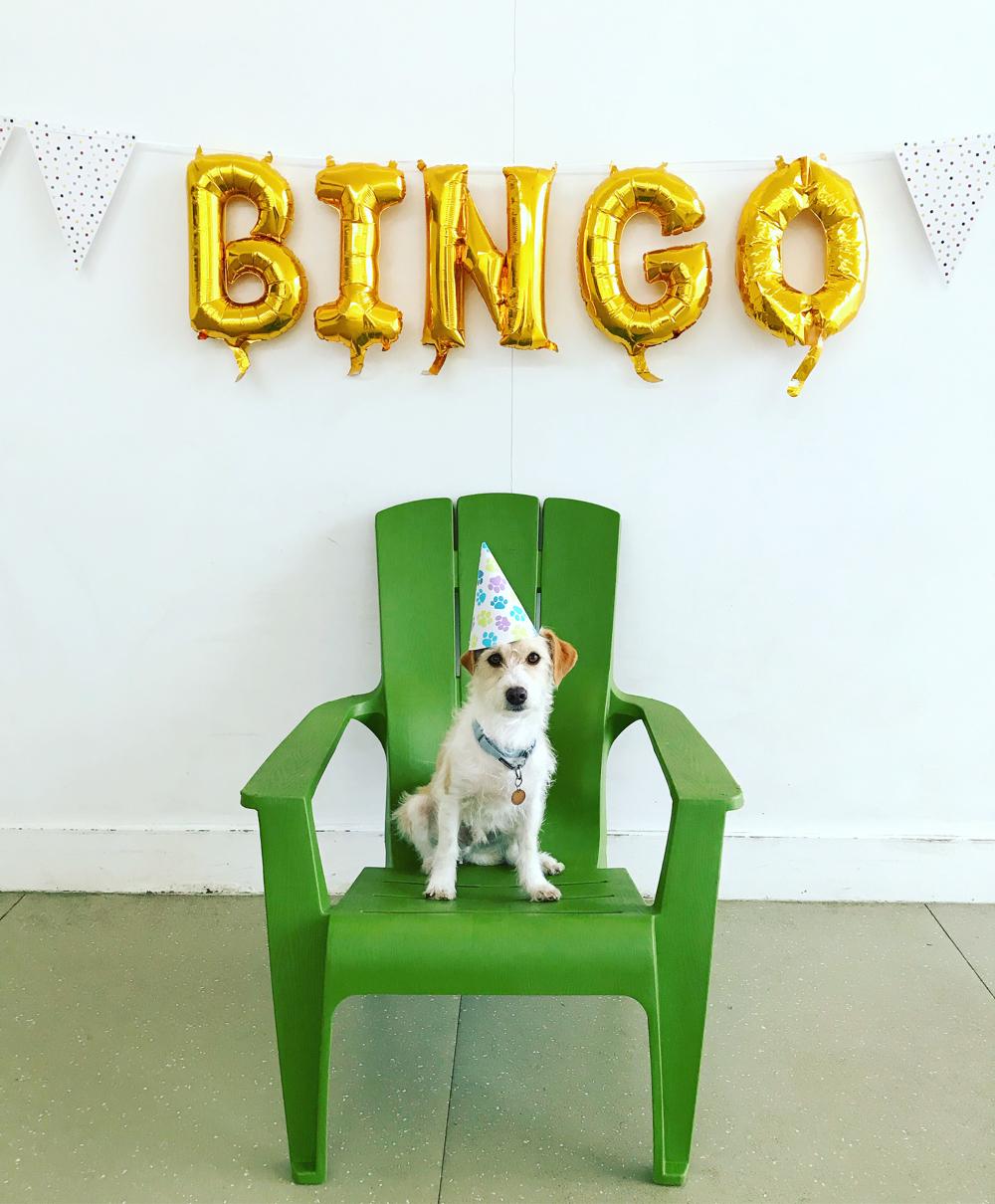 dog birthday party toronto
